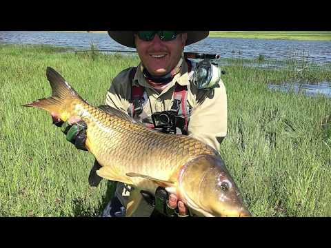 Carp on Fly - Africa Episode 1