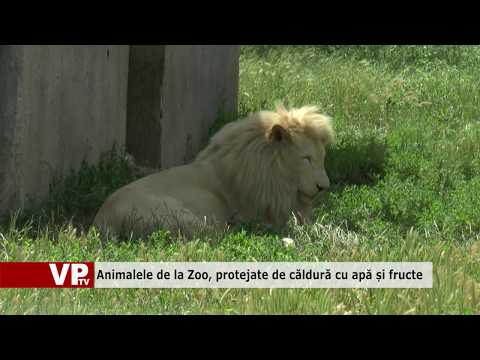 Animalele de la Zoo, protejate de căldură cu apă și fructe