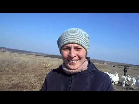 Гуляем с козами. Первая весенняя прогулка