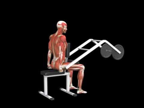 Triceps Dip (Lever)