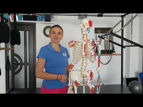 Articulațiile și oasele din tot corpul doare