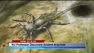 KU professor describes newly discovered prehistoric spider
