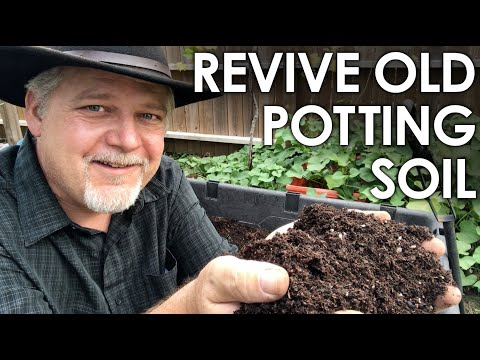 When Is It a Good Idea to Reuse Old Potting Soil?