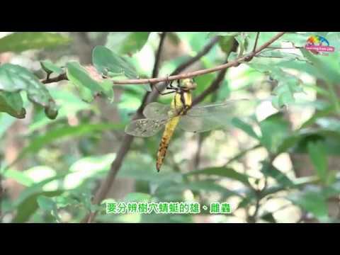 動物園內樹穴蜻蜓羽化 暖陽中蛻殼準備展翅飛
