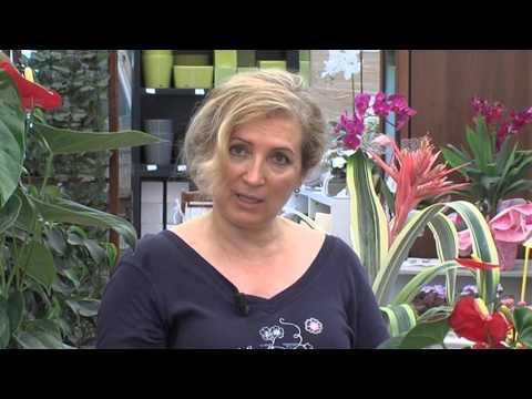 Come curare emorroidi anuzol
