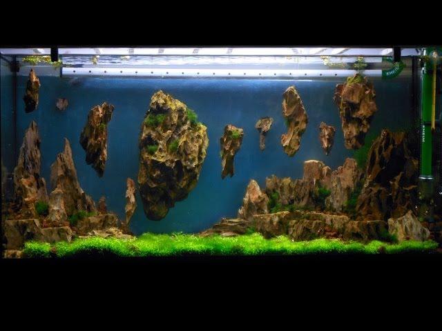 Allestimento acquario fantasy - Aquarium Setup - Aquascape: Esercitazioni Jedi STEP 3