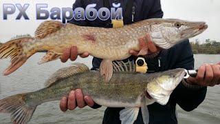 Платная рыбалка на водоеме барабой в одесской области