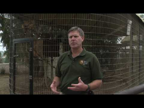 Zoo Animals : About Zoologists