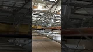 Amazon Renton SC509746-01 175698 Video #1