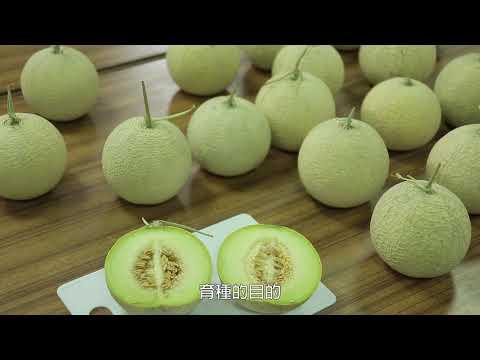 科技化的臺灣設施農業 10分鐘 中文版