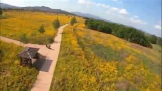 [DJI FPV] GOPRO7/Style Bunker 5X// 5월에 피는 꽃[금계국]