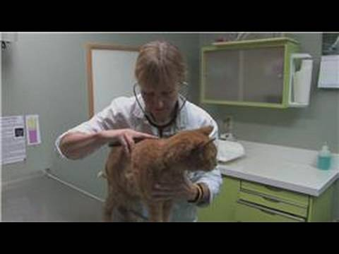 Video Cat Health : Signs of Liver Problems in Cats