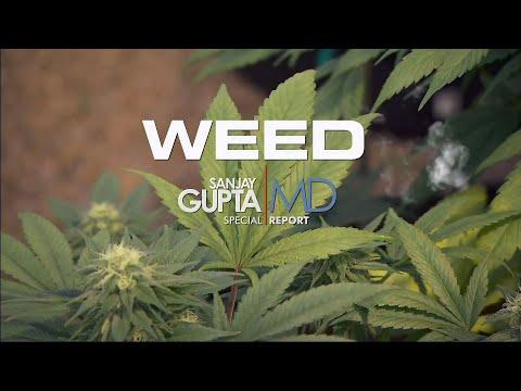 Dr Sanjay Gupta: Weed – CNN Special Documentary