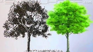Дерево Линером.