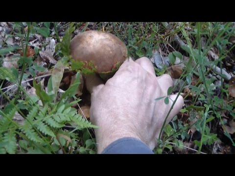 Unguento da un fungo per il bambino di 5 anni