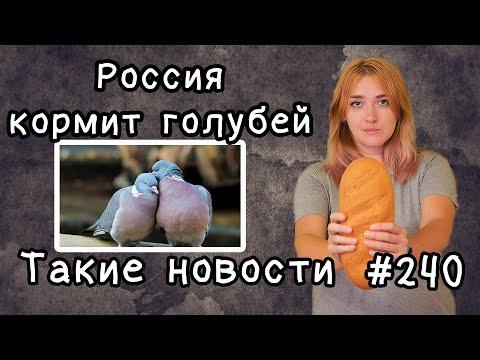 Россия кормит голубей. Такие новости №240