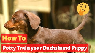 How To Potty Train A Dachshund Puppy? The Easiest Method Possible...