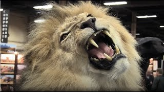 Free UK Screening of Blood Lions