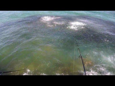 Fiskeri efter snooks med små multer