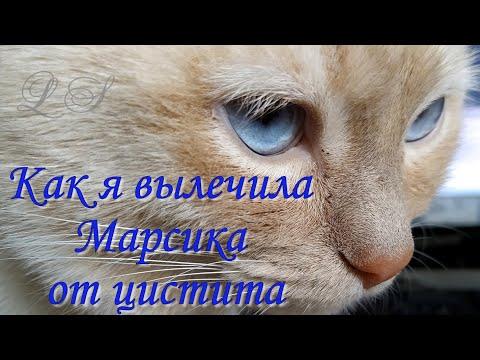 Цистит у кота. Как я вылечила Марсика от цистита. Лечение мочекаменной болезни у кошки