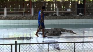 Krokodille Show I Chiang Mai