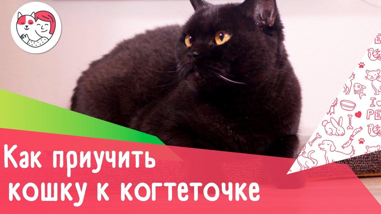 Как приучить кошку к когтеточке: 4 совета