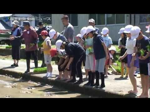 児童ら歓声上げ田植え体験