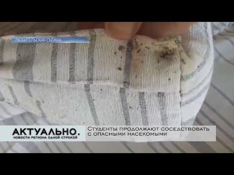 Актуально Псков / 15.10.2020