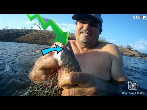 Pescaria e peixe na brasa...