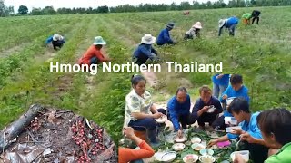 Hmong Northern Of Thailand Lifestyle & How They Live 2019 PT 1
