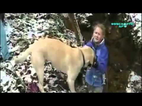 Clip hài hước về những chú chó Lạ Độc