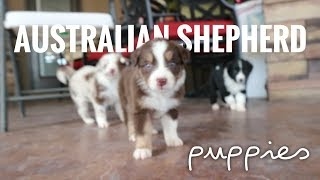 How to TAKE CARE of 4 WEEK old puppies | Weaning & Cleaning