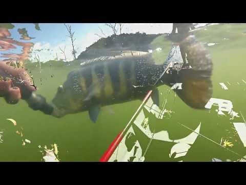 #1 Pescaria de tucunaré azul em Babaçulândia-TO