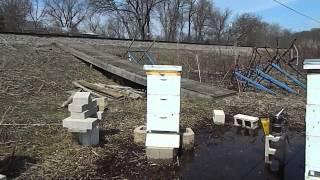 """Beekeeping 2014 Bee Yard After 1.5"""" Inches Of Rain"""