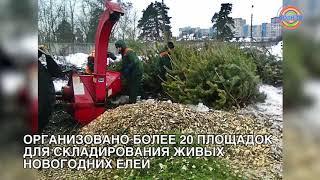 Коротко о разном 14/01: В Солнечногорске организовали площадки для сбора новогодних ёлок
