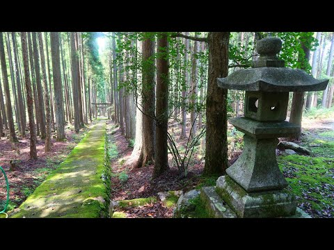 賀茂神社 (京都市右京区京北)(Kamo Shrine in Kyoto)[4K] [癒し音楽BGM付]