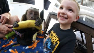 4 Year Old Meets Monkey!!!