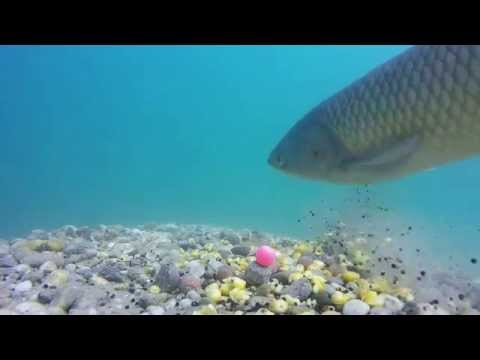 Come fare la pasta arieggiata per pescare di video