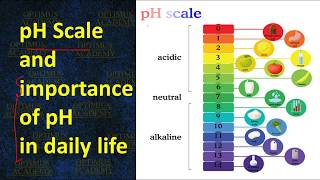 pH Scale and importance of pH in daily life