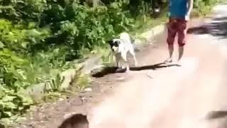 кошка зверь хлеще собаки ржака