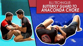 Butterfly Guard | Attacking the Anaconda choke | Jiu Jitsu technique