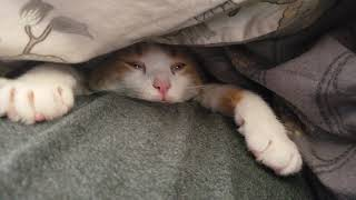 #cat #lazy #funny #ellentube #youtube #animals #ellen Our lazy cute fat cat sinks into sleep...