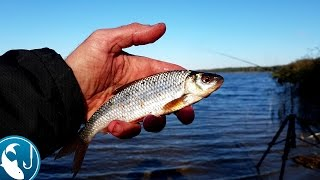 Как ловить осеннюю плотву на #фидер осенняя рыбалка.