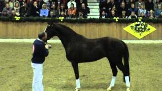 video of Blue Hors Don Olymbrio