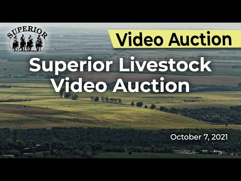 Superior Livestock Video Auction