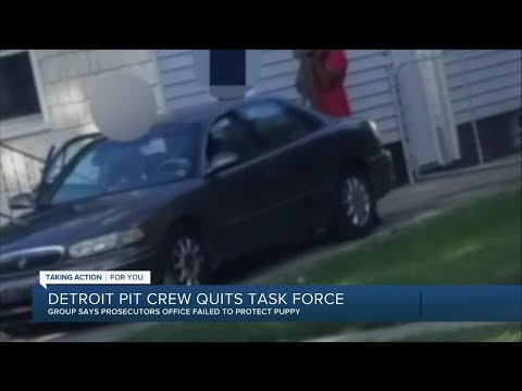 Detroit Pit Crew outraged over puppy abuse case, quits Macomb County Prosecutor's Office