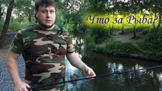 Рыболов 9 мая химки