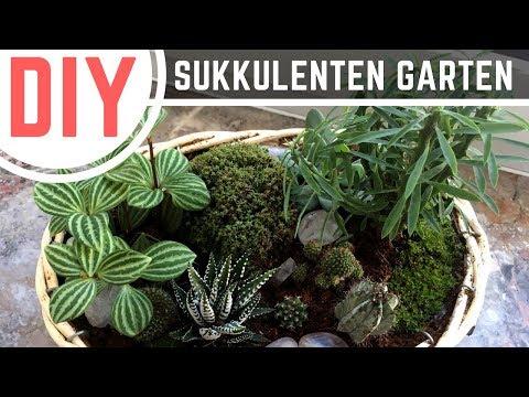DIY Deko: Kakteen- und Sukkulenten Garten / Pflanzschale selber machen