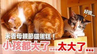 米香:好像把小貓養太胖了...米香的母親節蛋糕【貓副食食譜】好味貓鮮食廚房EP146