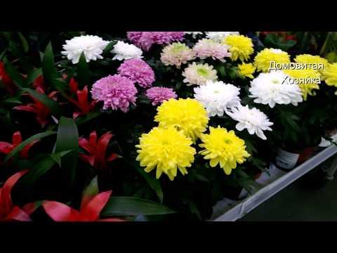 🌷Леруашные🌷цветочки🌷 Новый завоз красиво цветущих в Леруа Мерлен #ДомовитаяХозяйка